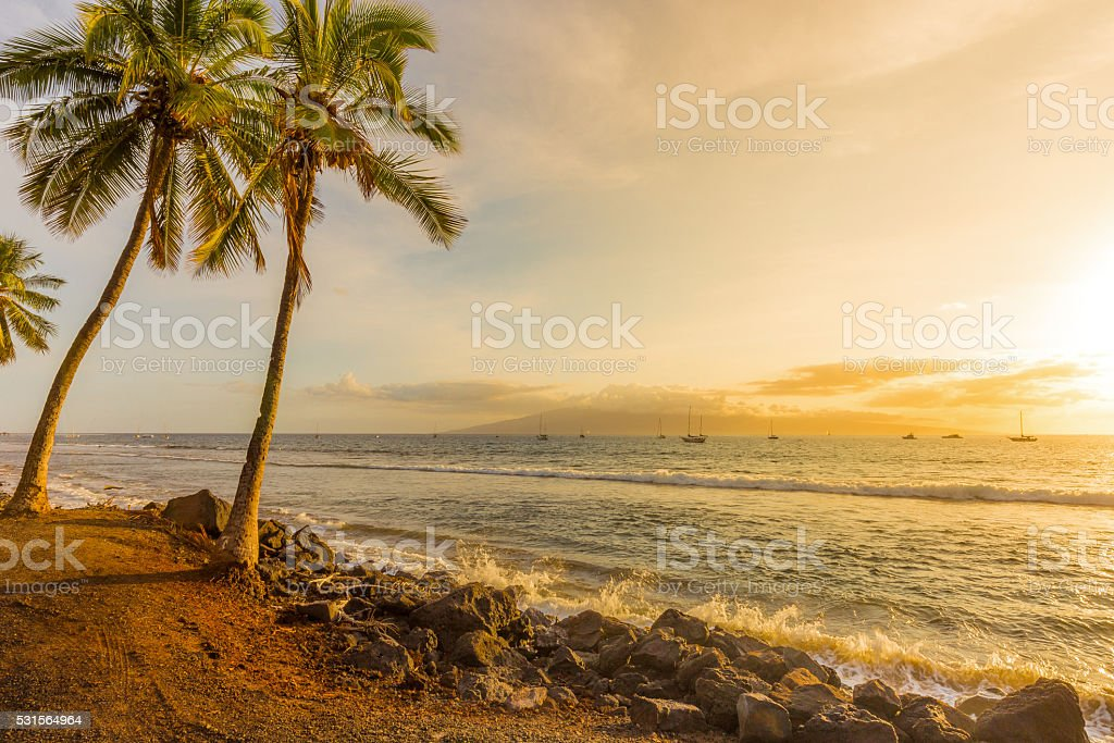 Palm Trees on the Beach at Sunset in Harbor stock photo
