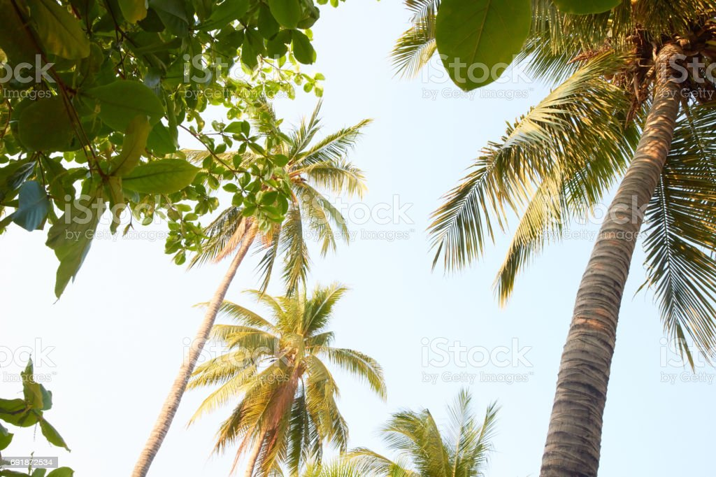 palm trees on the beach in Thailand stock photo