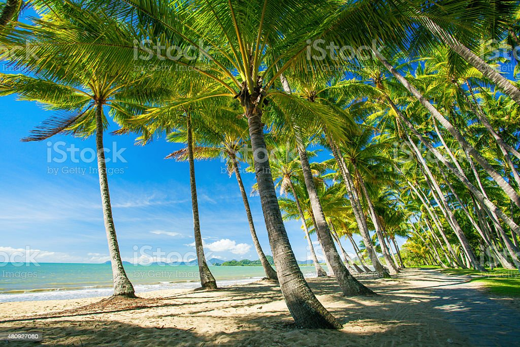 Palm trees on the beach of Palm Cove stock photo