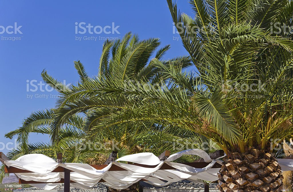 Palm trees on the beach royalty-free stock photo