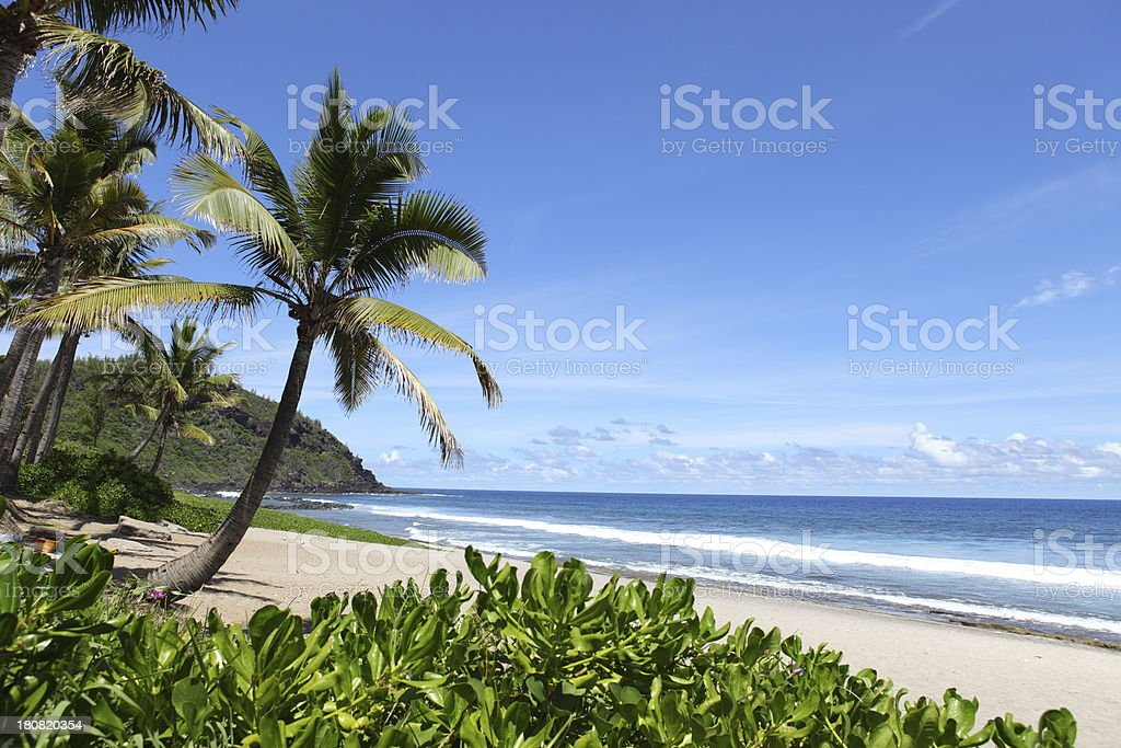Palm Trees on the beach stock photo