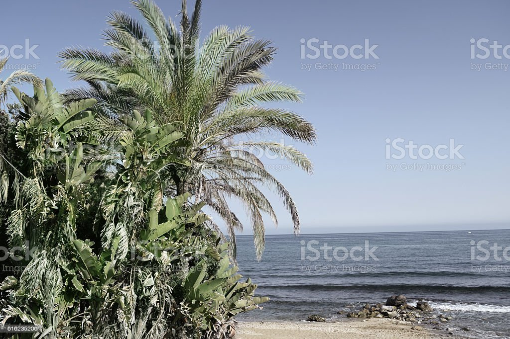 Palm trees on the beach. Vintage filter stock photo