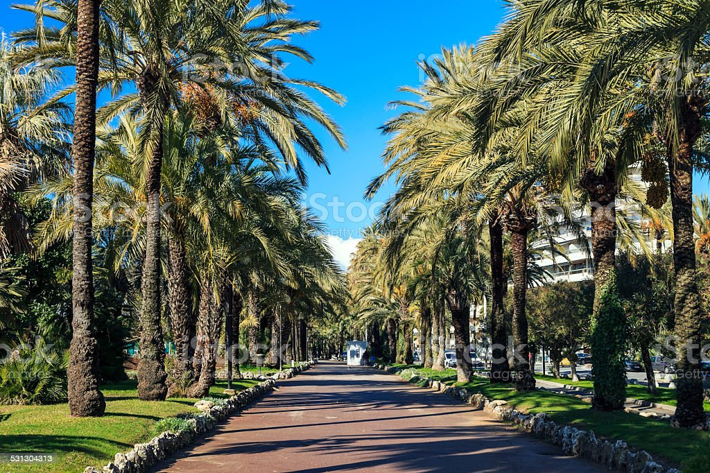Palm trees on the Croisette in Cannes stock photo