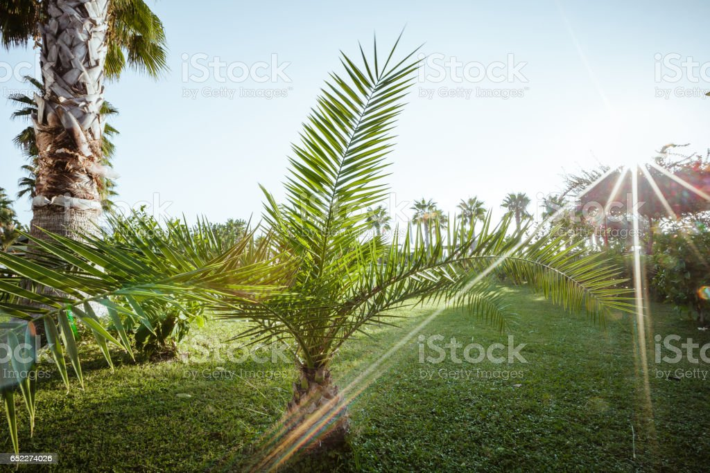 Palm trees on the green grass stock photo
