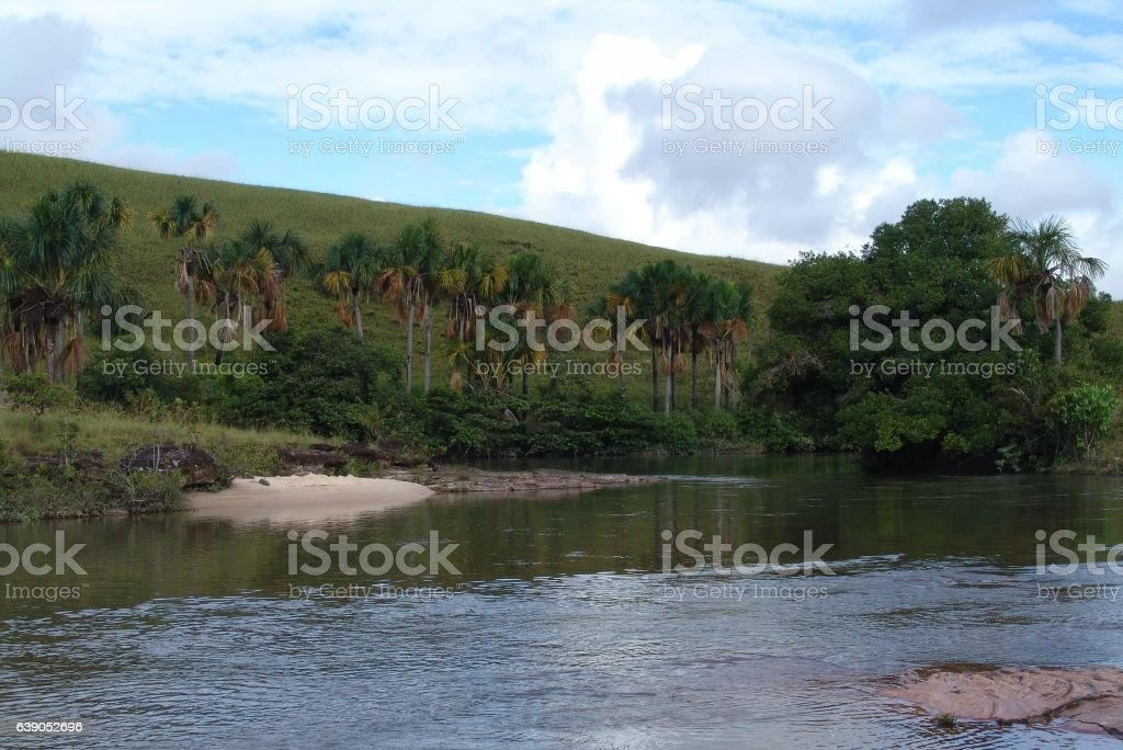 Palm trees on the river. stock photo