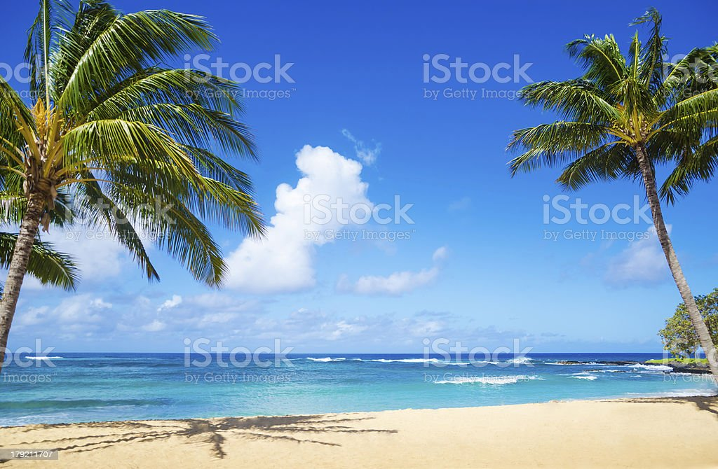 Palm trees on the sandy beach in Hawaii stock photo
