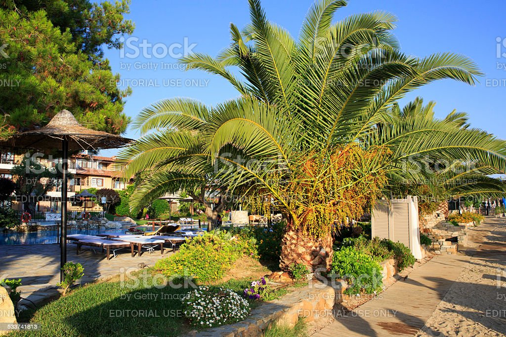 Palm trees on the site of Anthemus Sea Beach Hotel stock photo