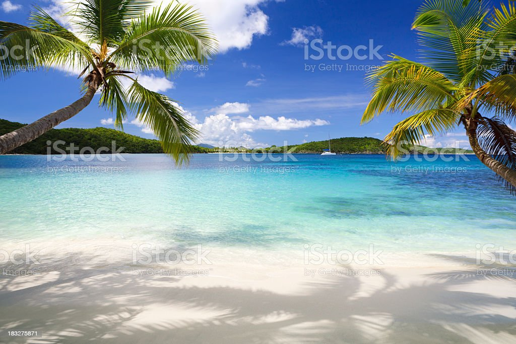 Palm trees on tropical beach in the Virgin Islands stock photo