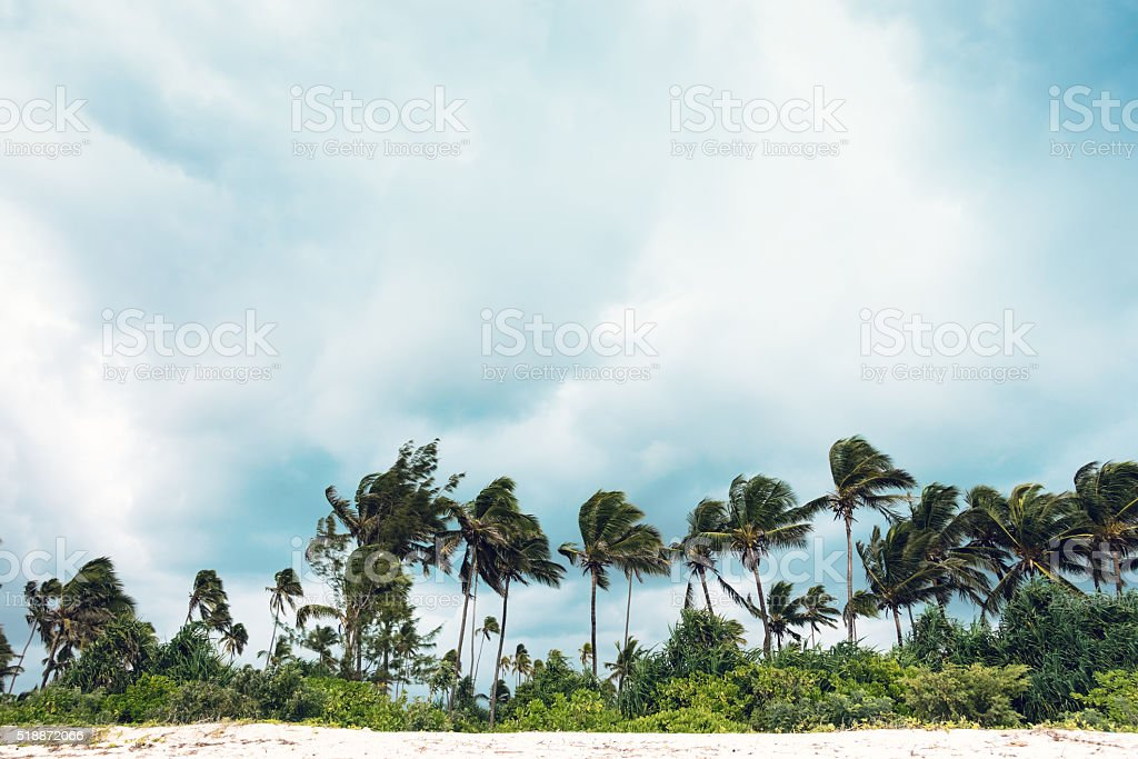 Palm Trees On Zanzibar Island stock photo