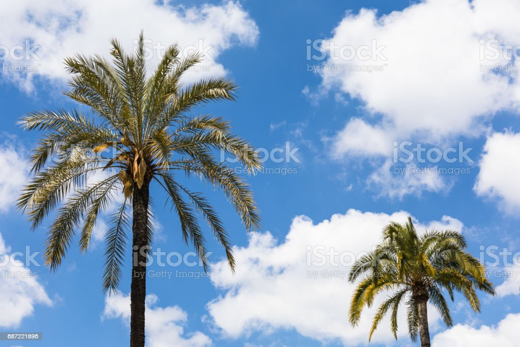 Palm trees over sky stock photo