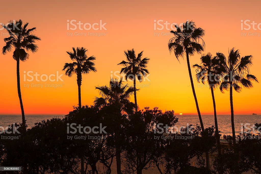 Palm trees over the Manhattan Beach and Pier on sunset stock photo