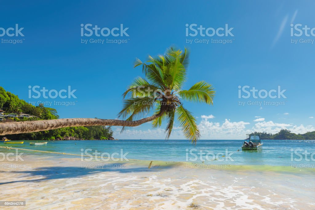 Palm trees over the surf stock photo