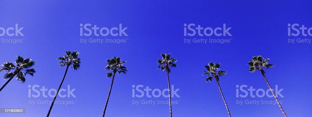Palm Trees Panoramic Background royalty-free stock photo