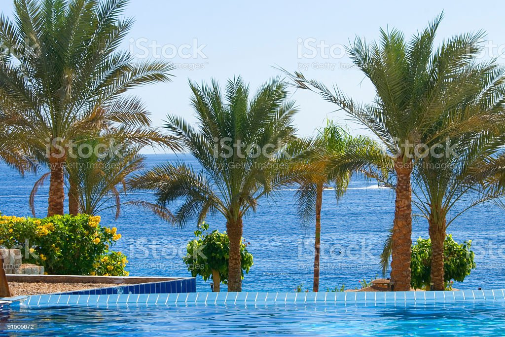Palm trees . royalty-free stock photo