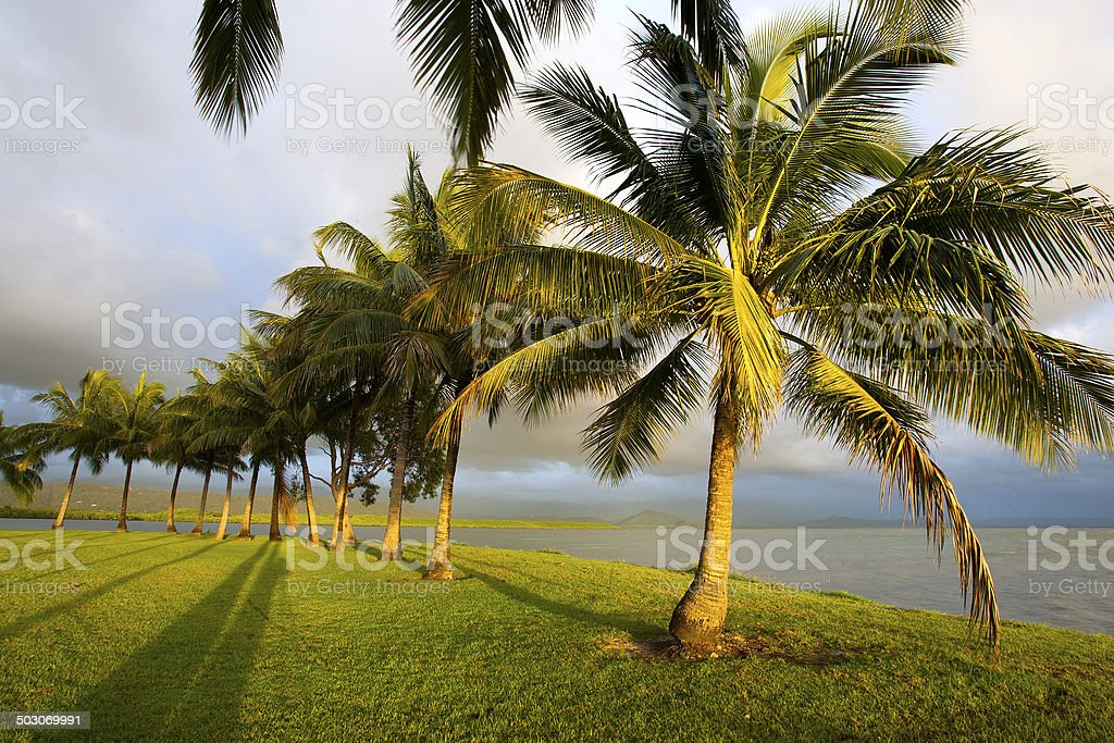 Palm Trees, Queensland, Australia royalty-free stock photo