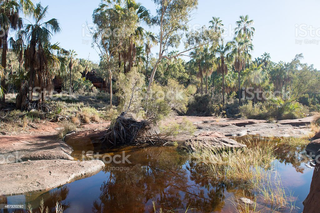 Palm trees reflected in a rock pool stock photo