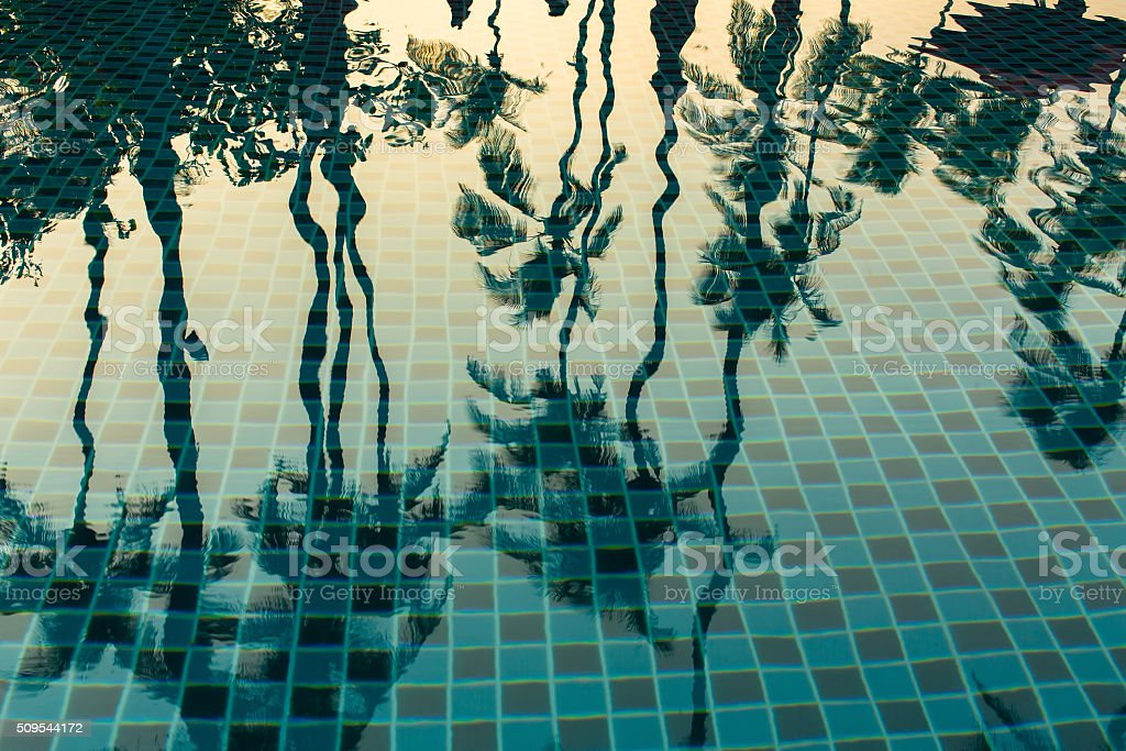 Palm trees reflected in the water of the pool. stock photo