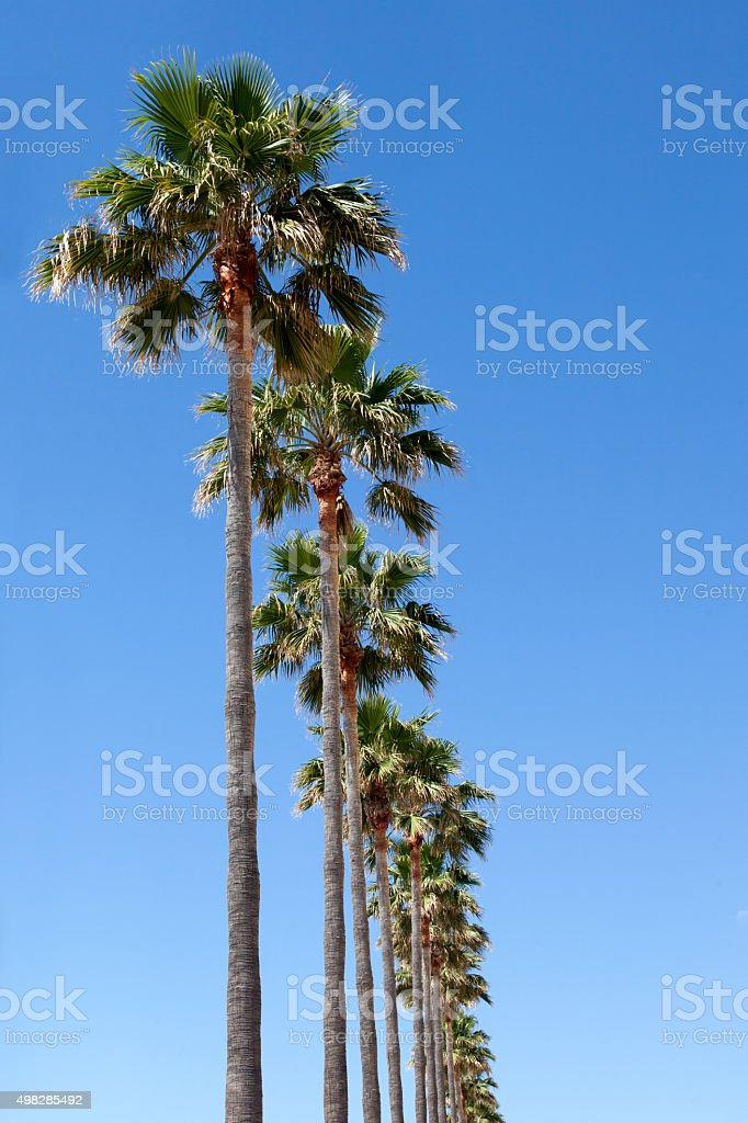 Palm trees road stock photo