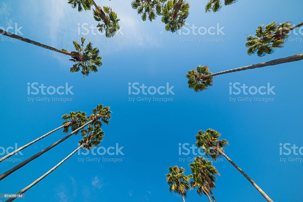 palm trees seen from below stock photo