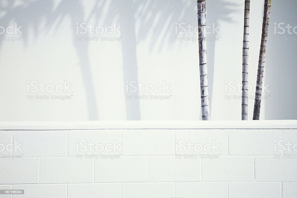 Palm trees & Shadows stock photo