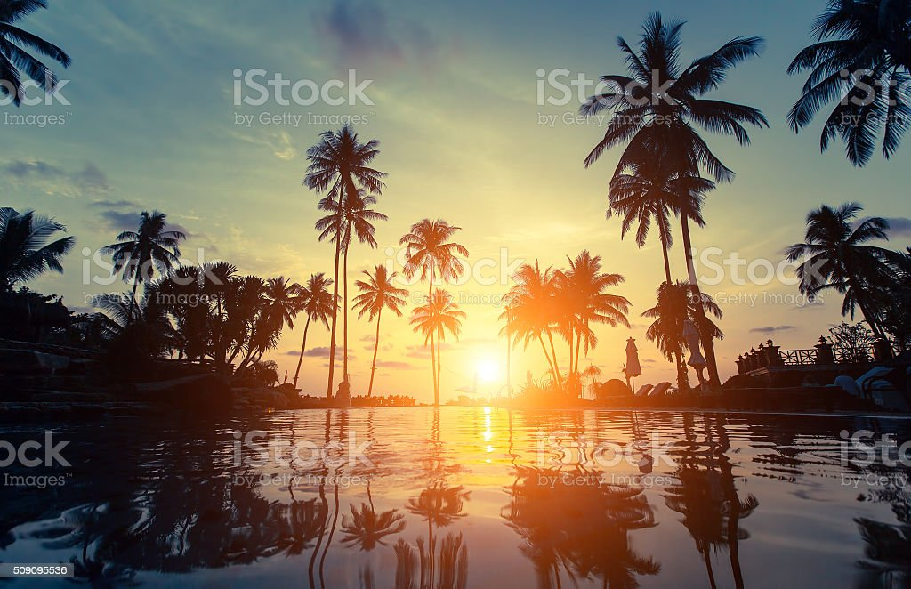 Palm trees silhouette at amazing sunset stock photo