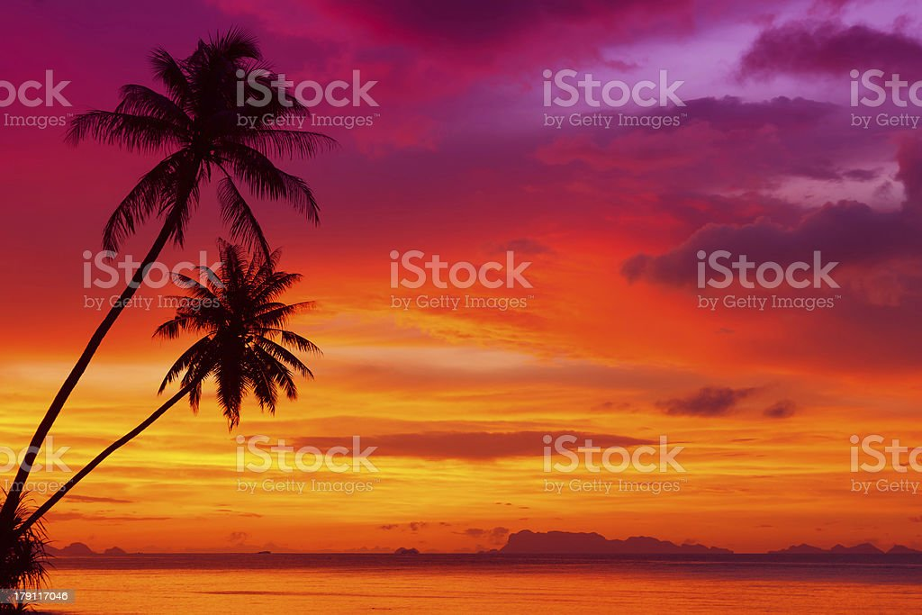 Palm trees silhouette on sunset stock photo