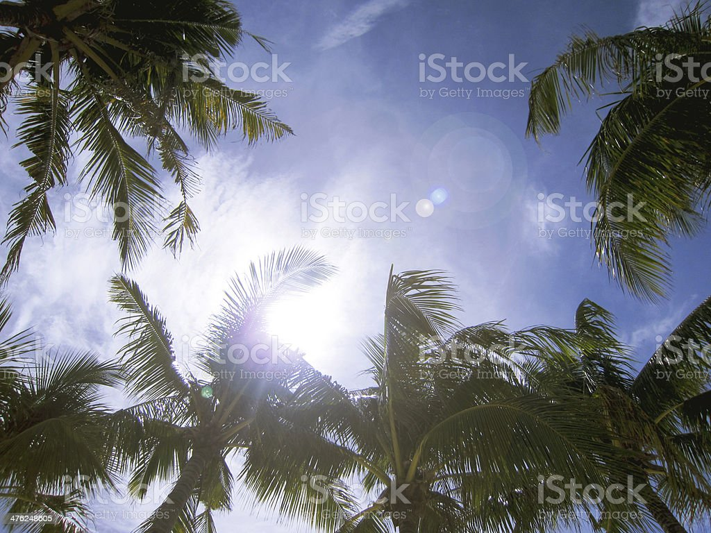 Palm Trees Sky royalty-free stock photo