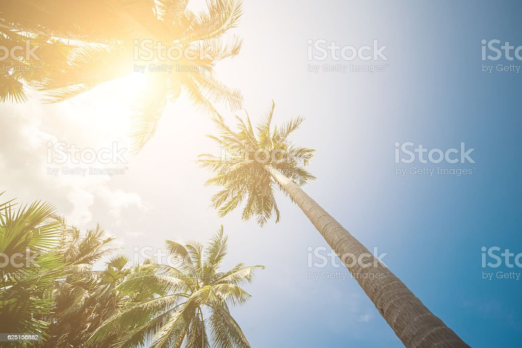 Palm Trees Sun Light Hot Equator Nature Landscape Tropical Background stock photo