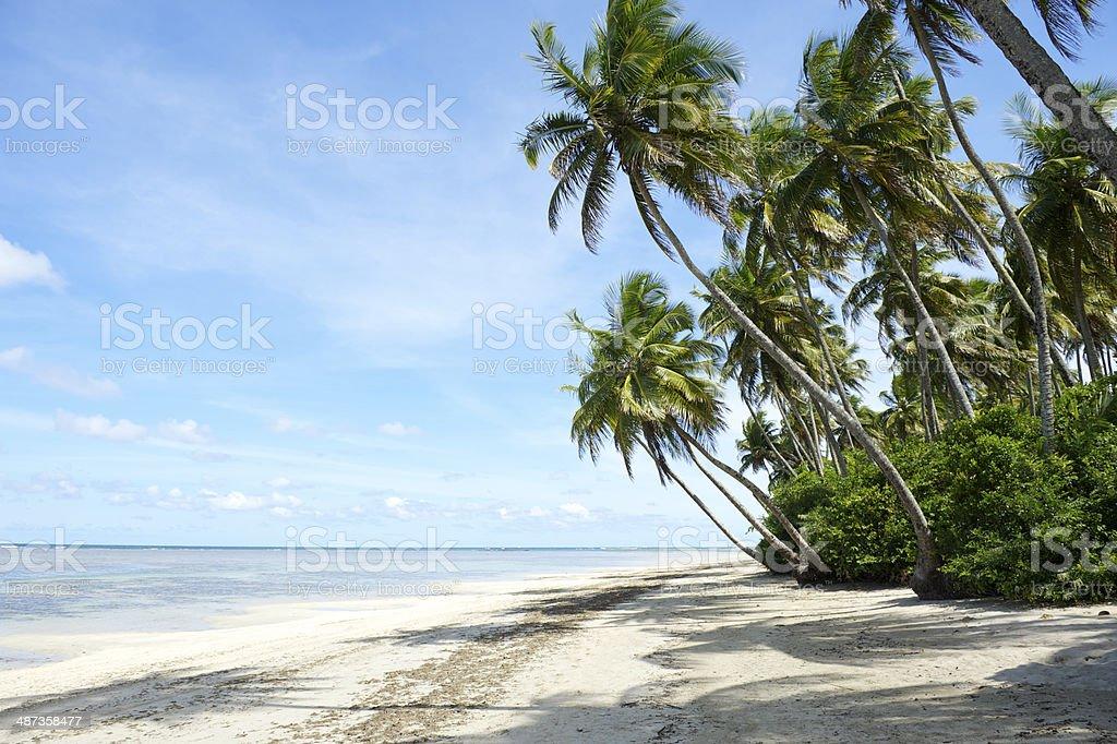 Palm Trees Tropical Brazilian Beach stock photo
