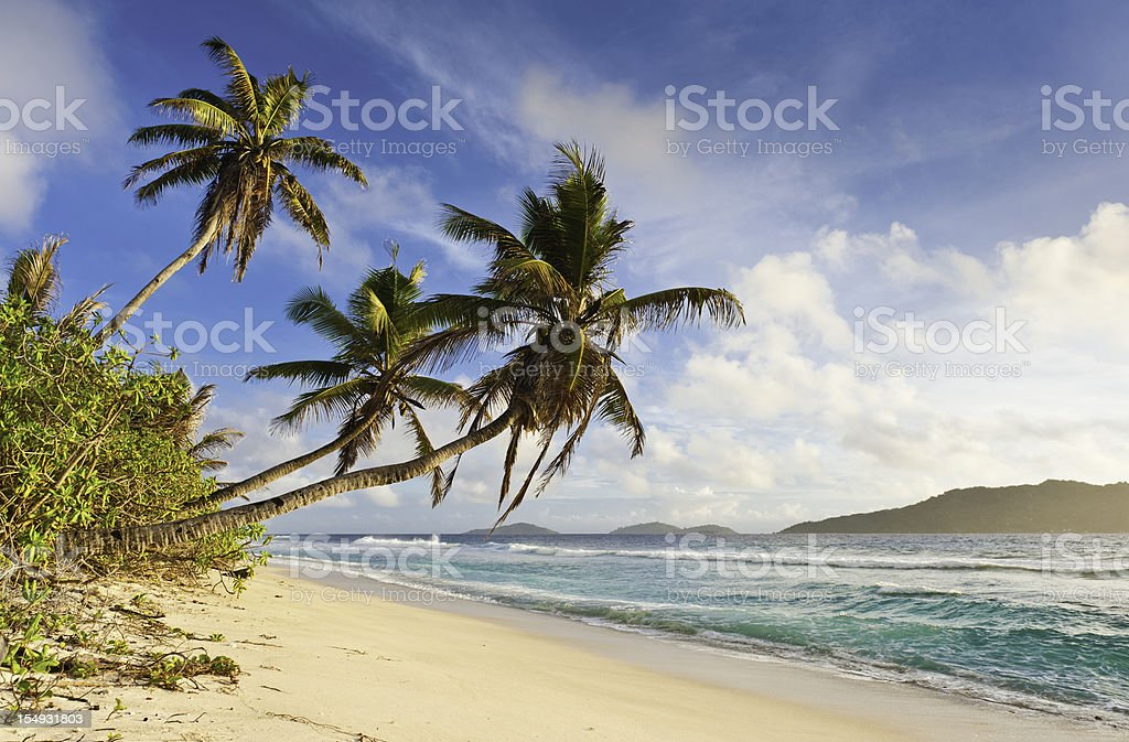 Palm trees waving over tropical island golden sand beach royalty-free stock photo