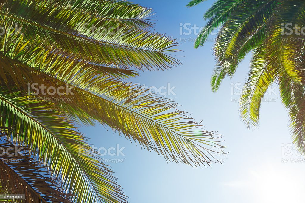 Palm trees with a sky and the sun stock photo