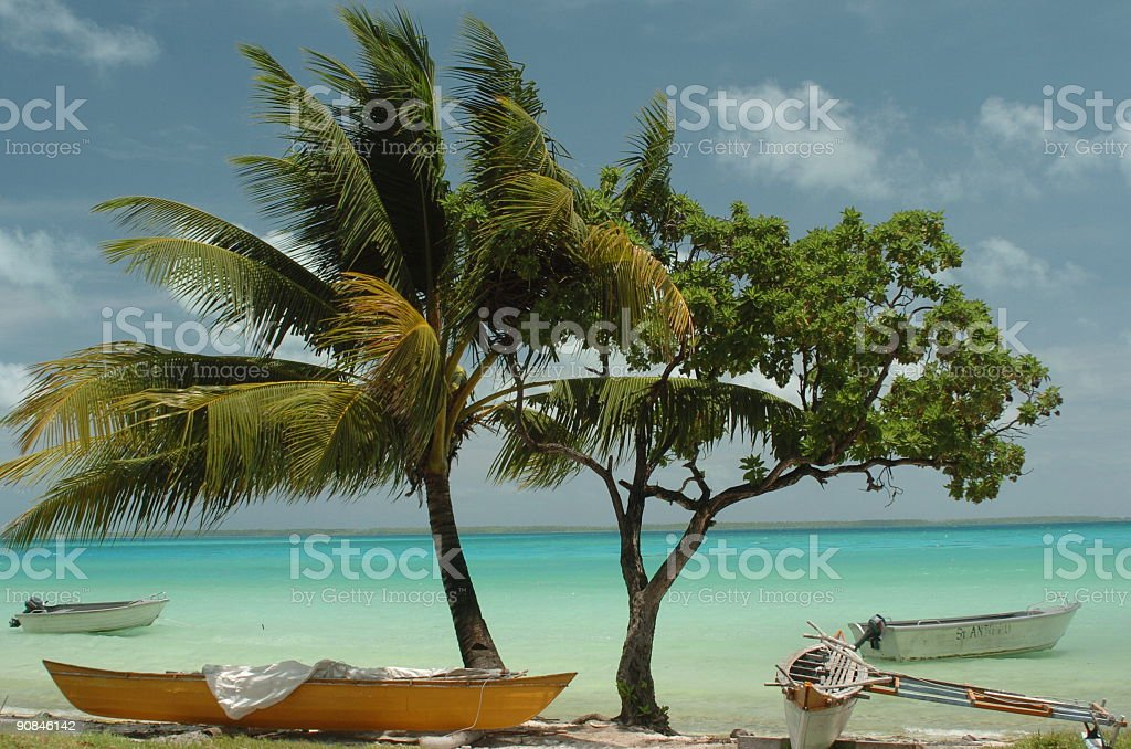 Palm trees with boats stock photo