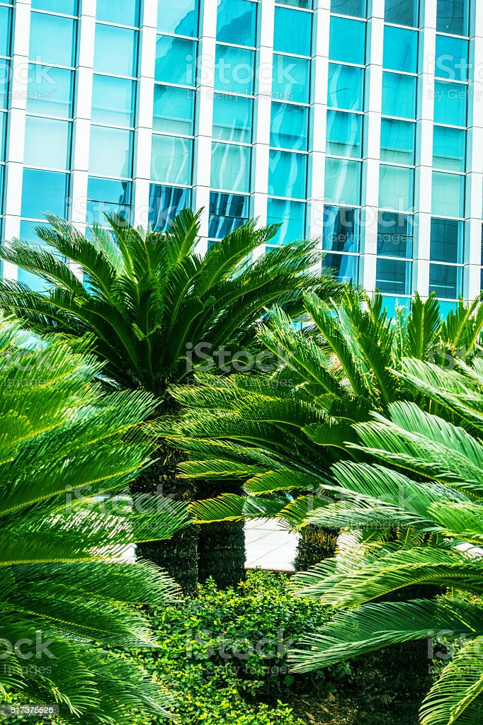 Palm trees with office building stock photo