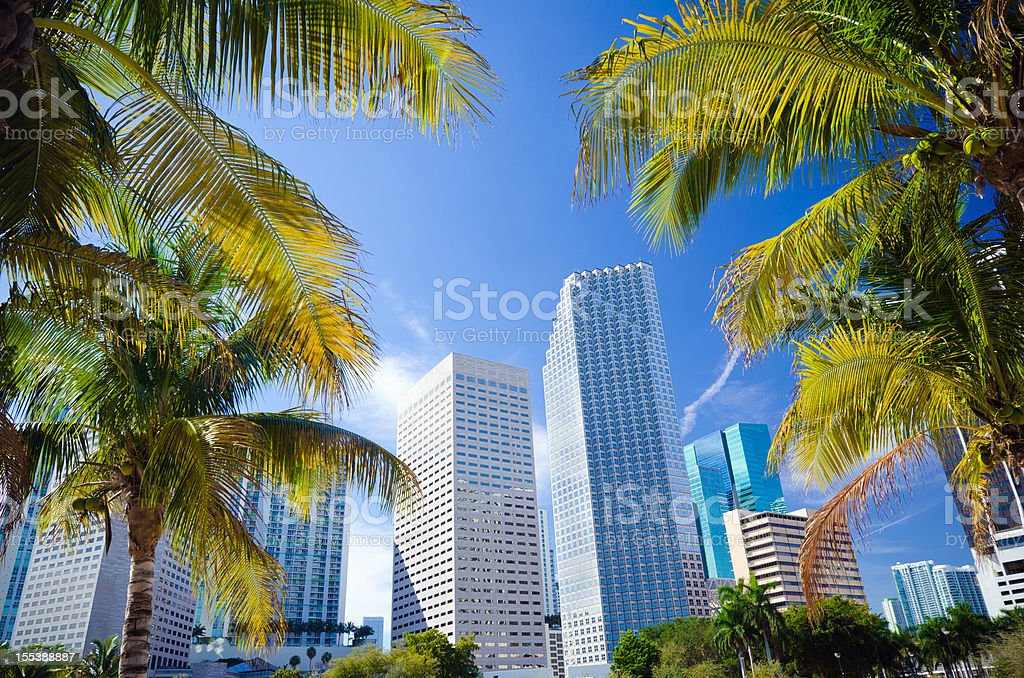 Palm trees with office buildings in Miami, FL royalty-free stock photo