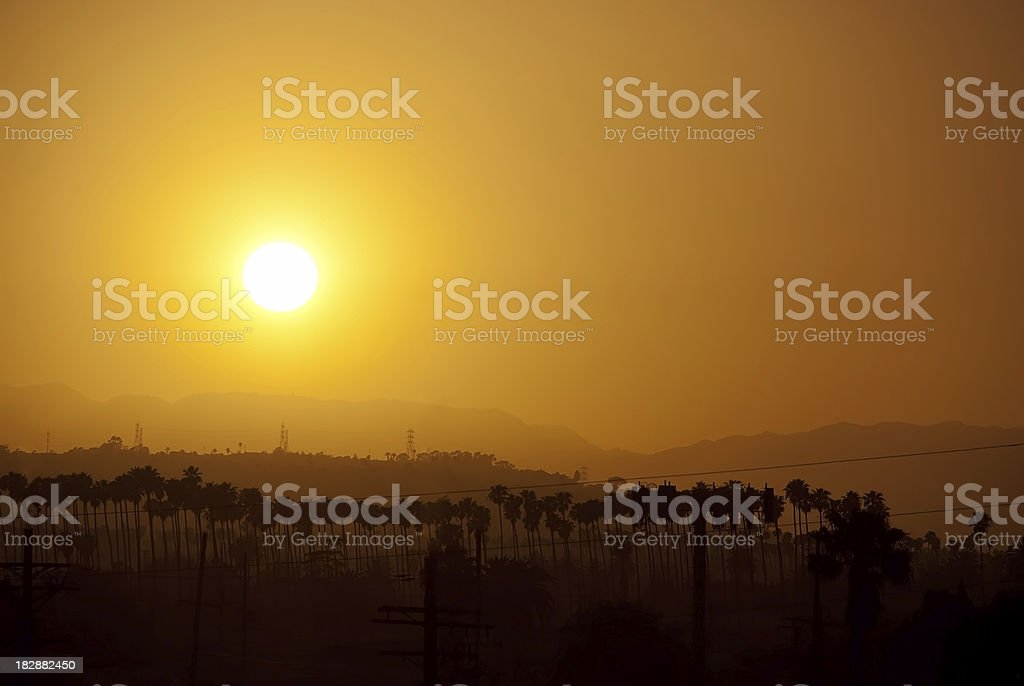 Palm Trees with Setting Sun in Los Angeles, California royalty-free stock photo