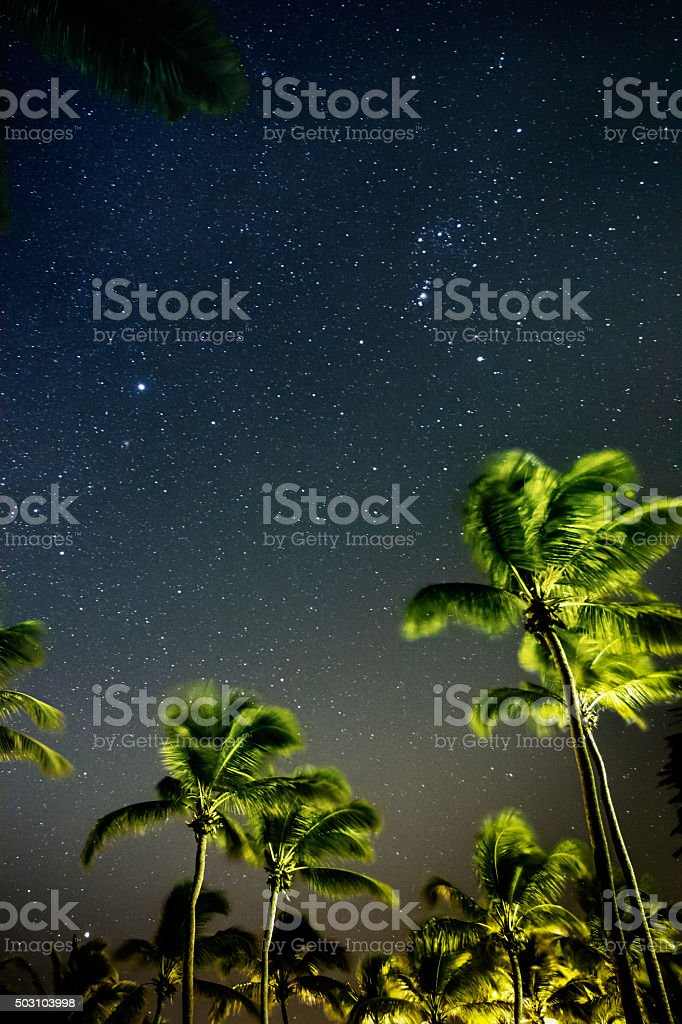 Palm trees with starry sky stock photo