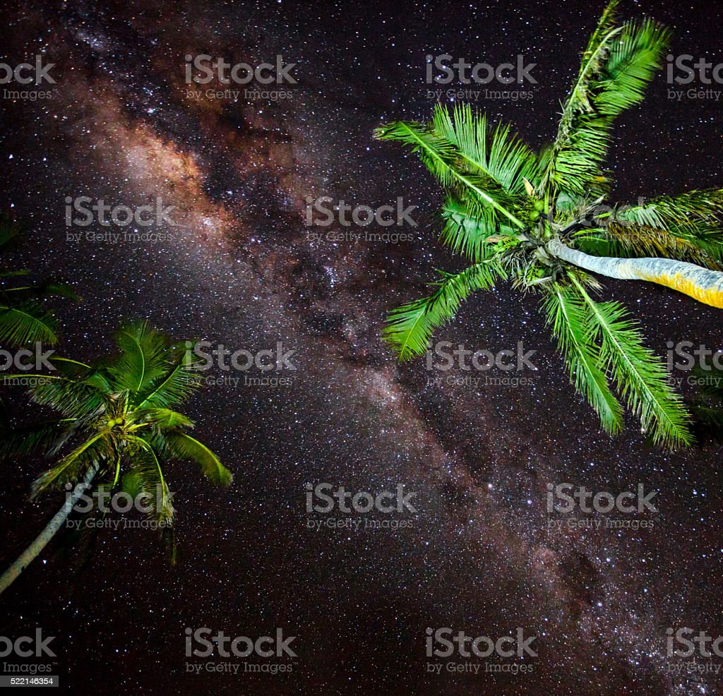 Palm trees with stars stock photo