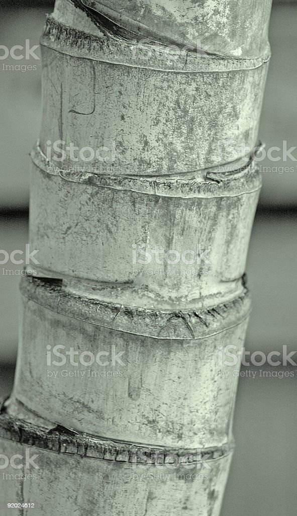 Palm Trunk stock photo