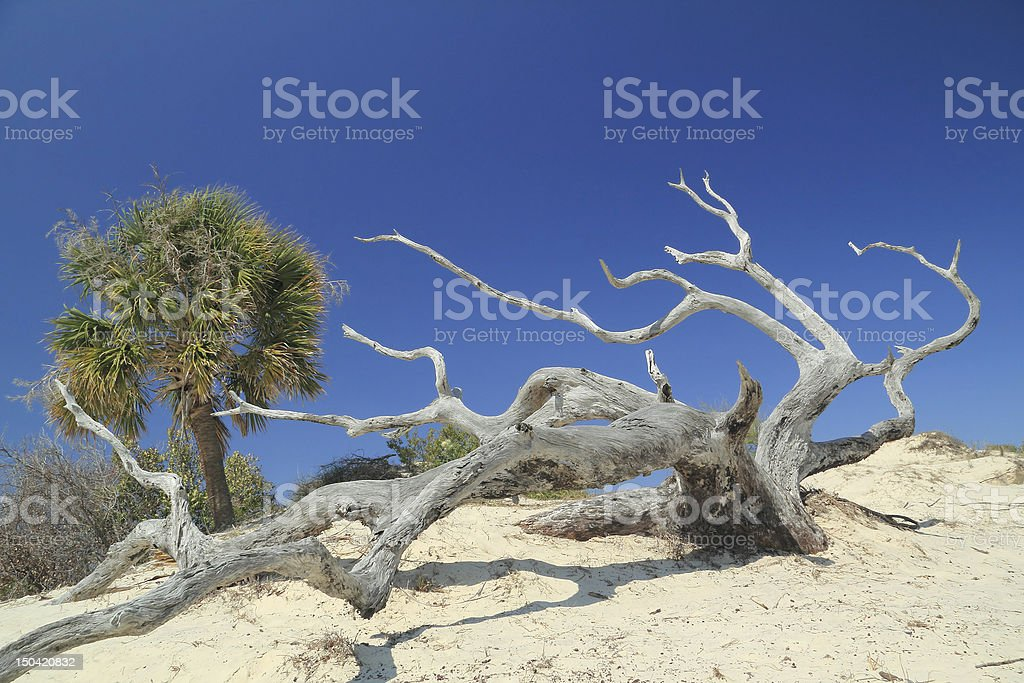 Palm, Weathered Tree Trunk and Sand Dune - Cumberland Island stock photo