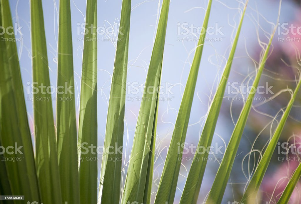 palm whispers royalty-free stock photo