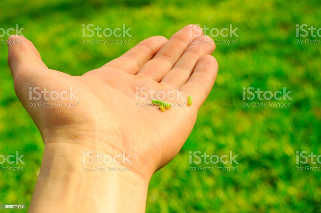 Palm with caterpillars against the background of green nature stock photo