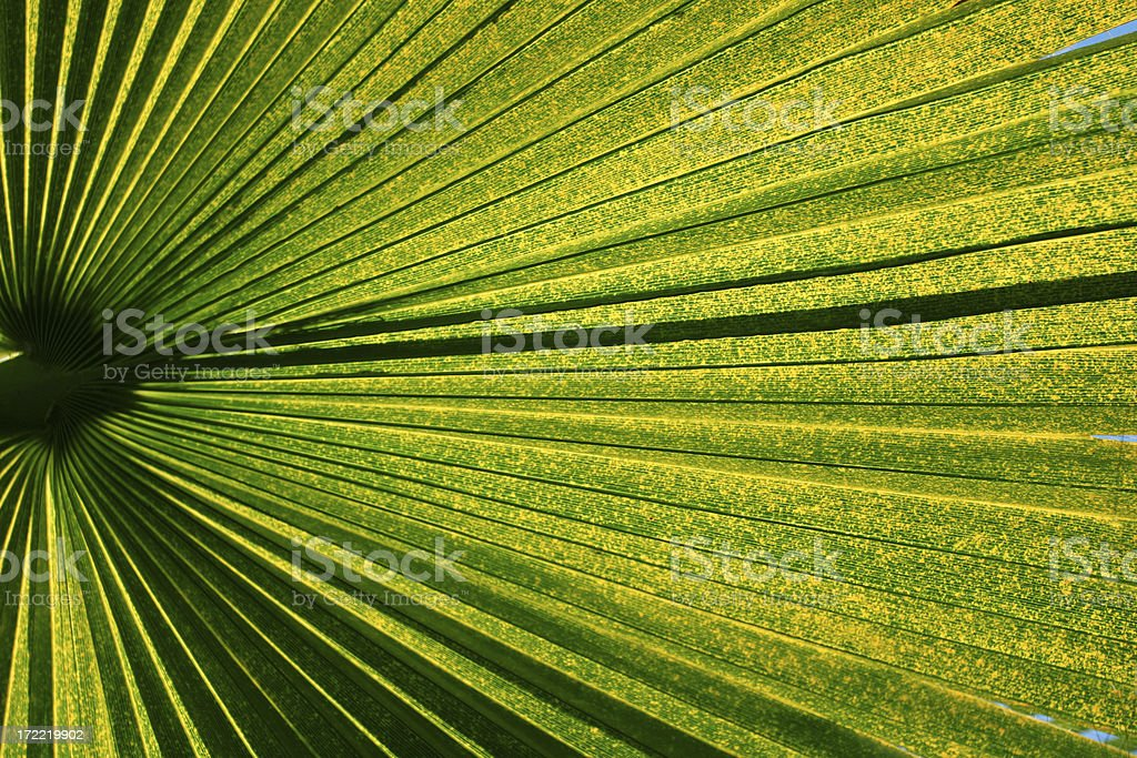 palm01 royalty-free stock photo