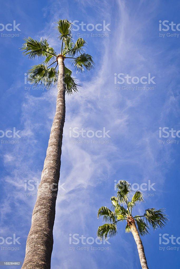 Palma royalty-free stock photo