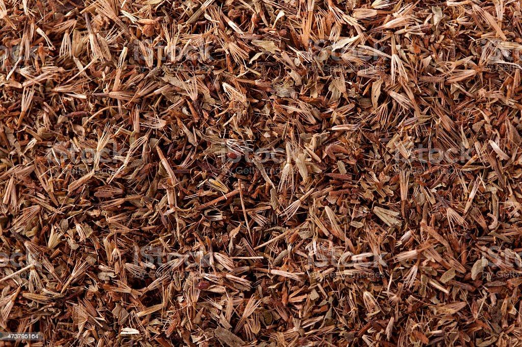 Palmarosa grass seeds (Cymbopogon martinii) stock photo