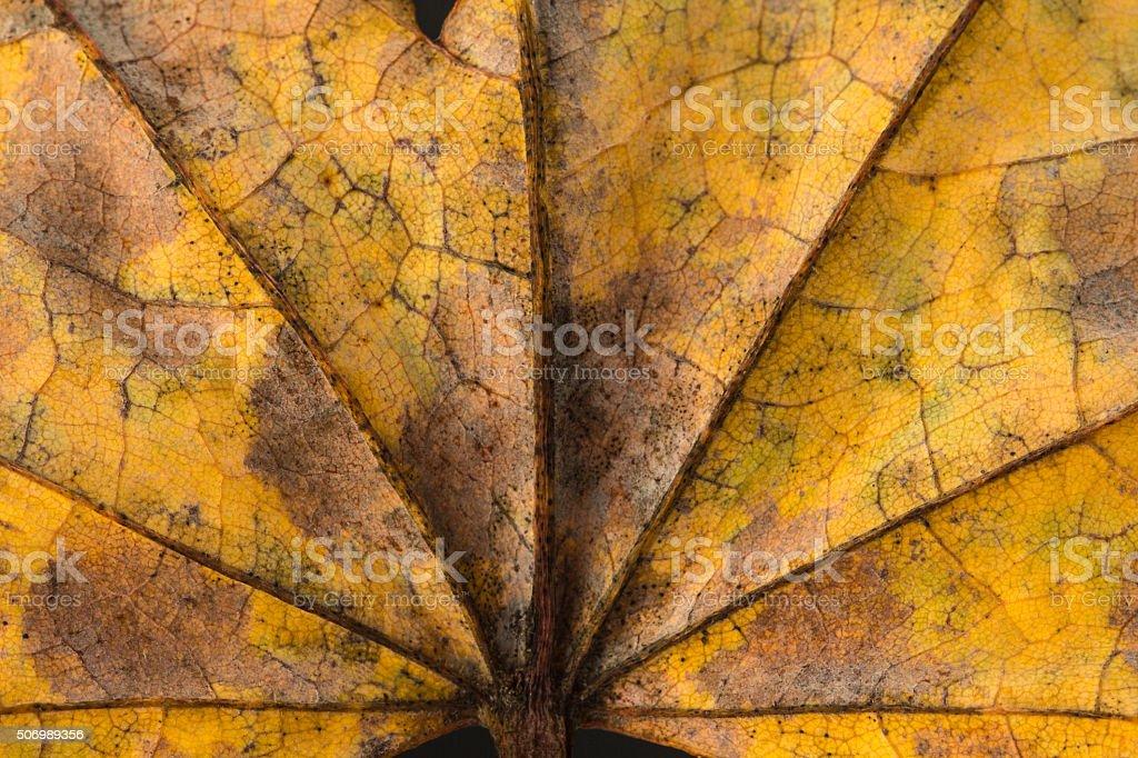 Palmate leaf background. stock photo