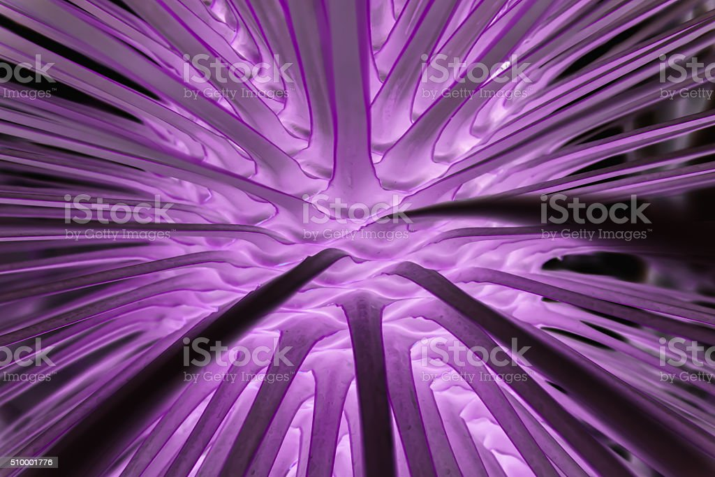 Palme abstrakt stock photo