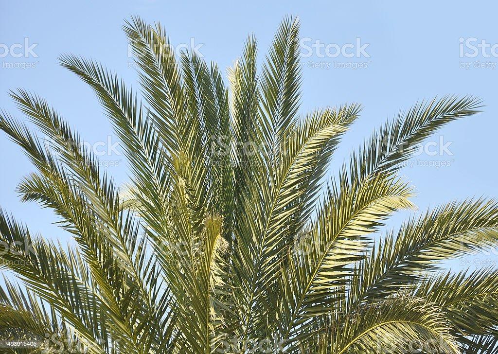 Palme Nahaufnahme Palmenblätter vor Himmel stock photo