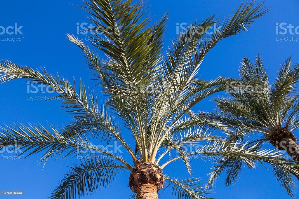 Palme stock photo