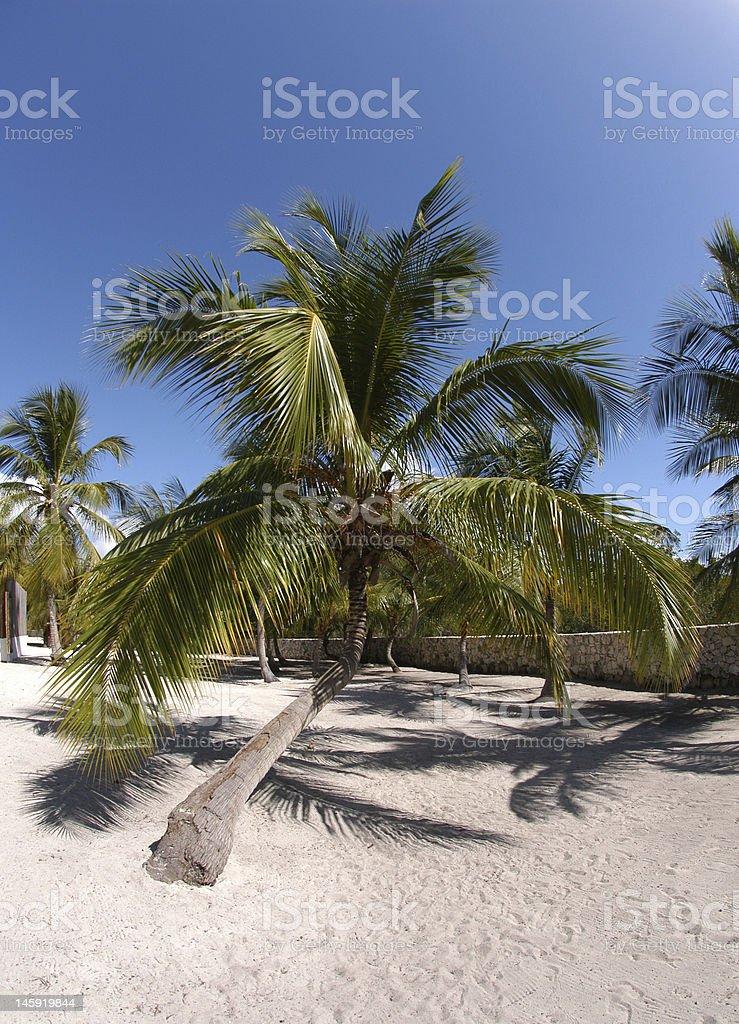 palme sulla spiaggia bianca di Santo Domingo stock photo