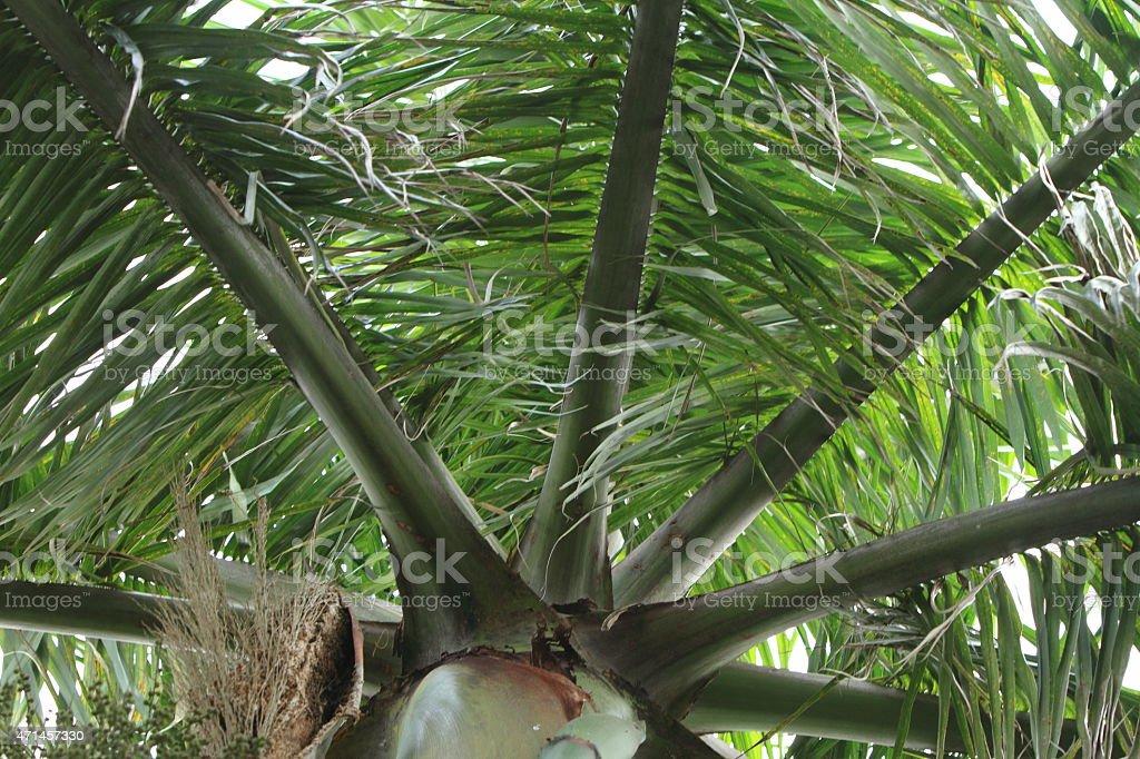 Palme von unten stock photo